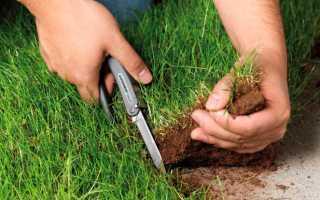 Как защитить право собственности на землю от посягательств родственников